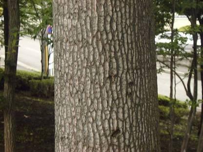 木 ゆり の